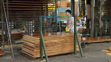 「 广东建筑模板工厂」广东嘉龙木业厂区介绍